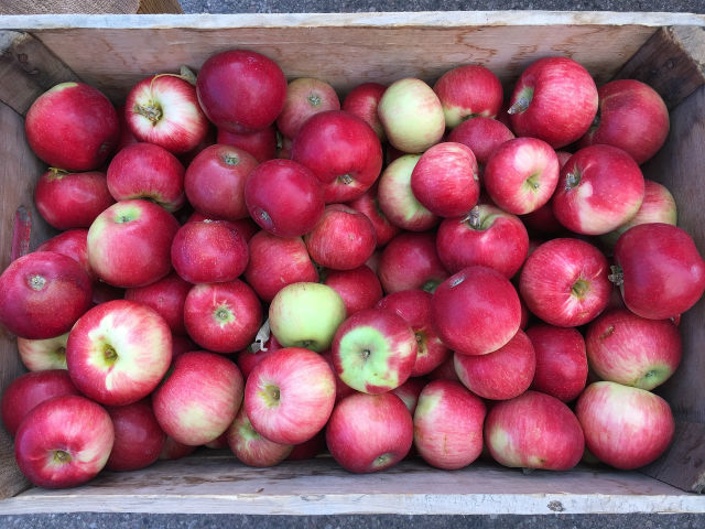apples-1815200_1280
