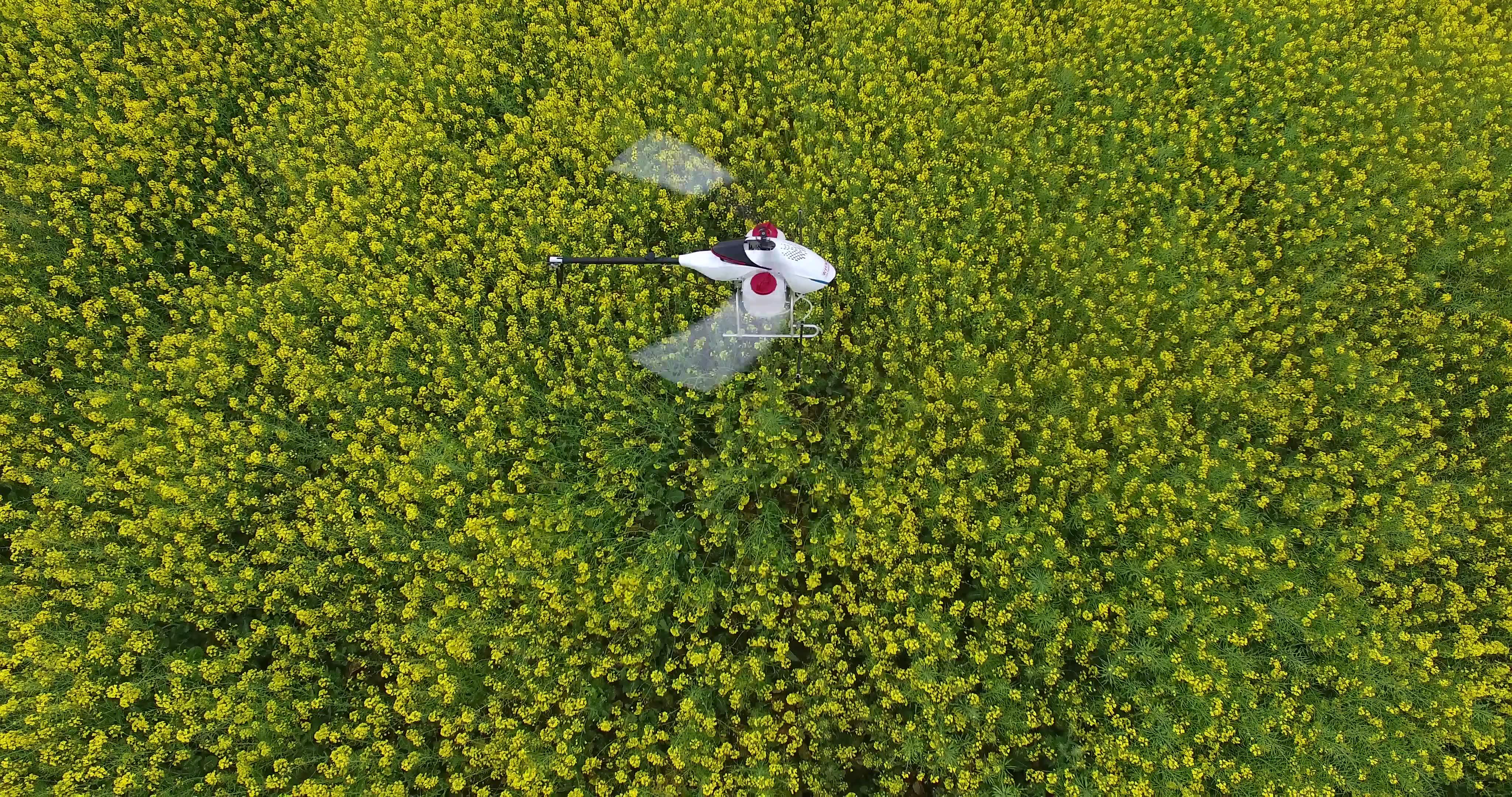 无人机在万亩油菜花田上空作业01