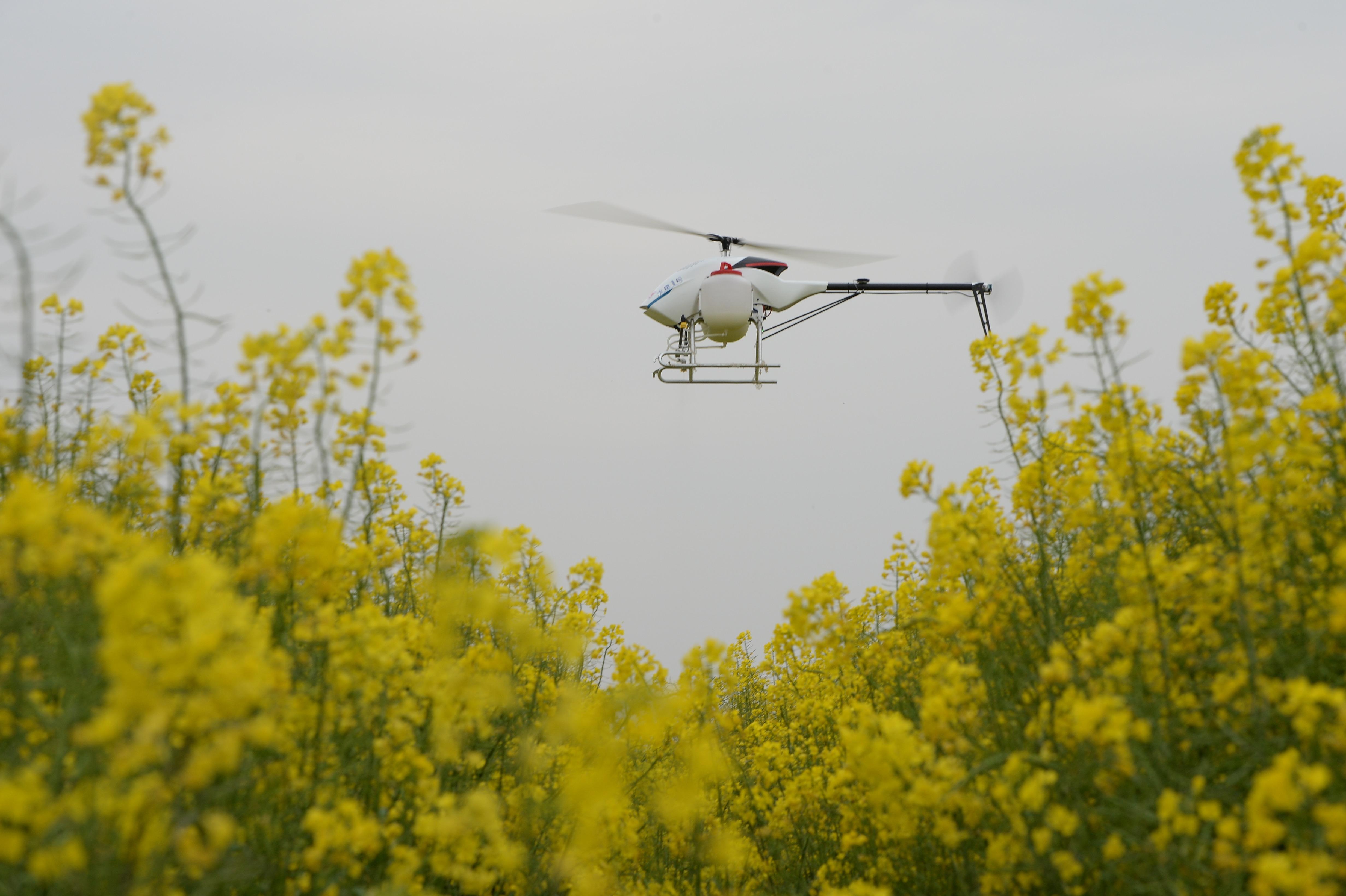 植保无人机,施肥效率大大优于人工,被称为规模化、机械化种植的黑科技。