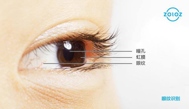 眼纹示意图