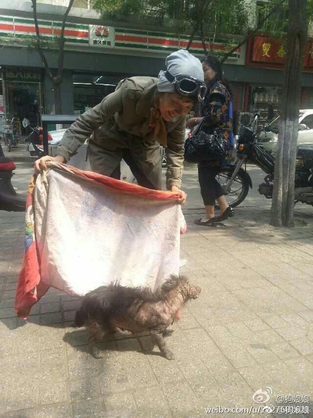 狗娘娘救助街边的流浪狗