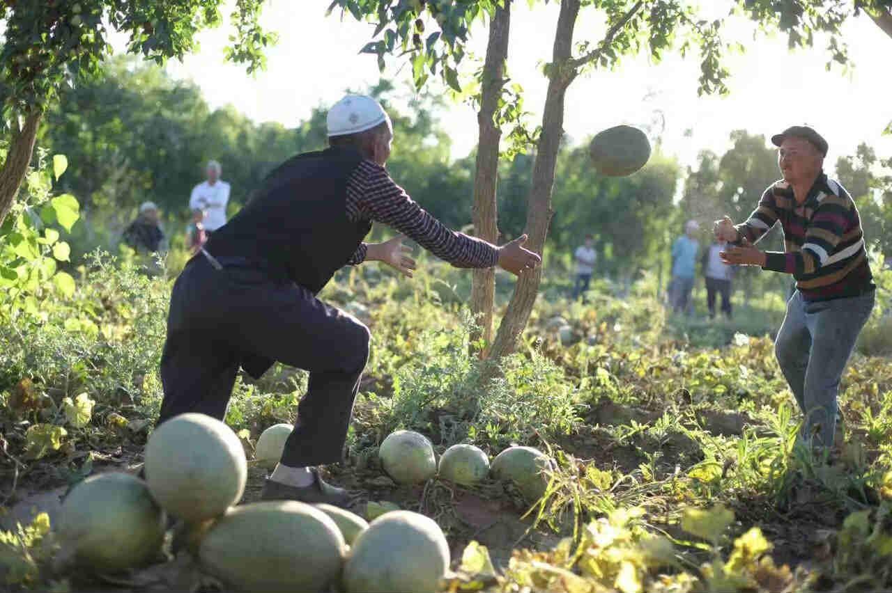 顽强的巴楚农民在沙漠边缘争取来了香甜的果实2_meitu_3
