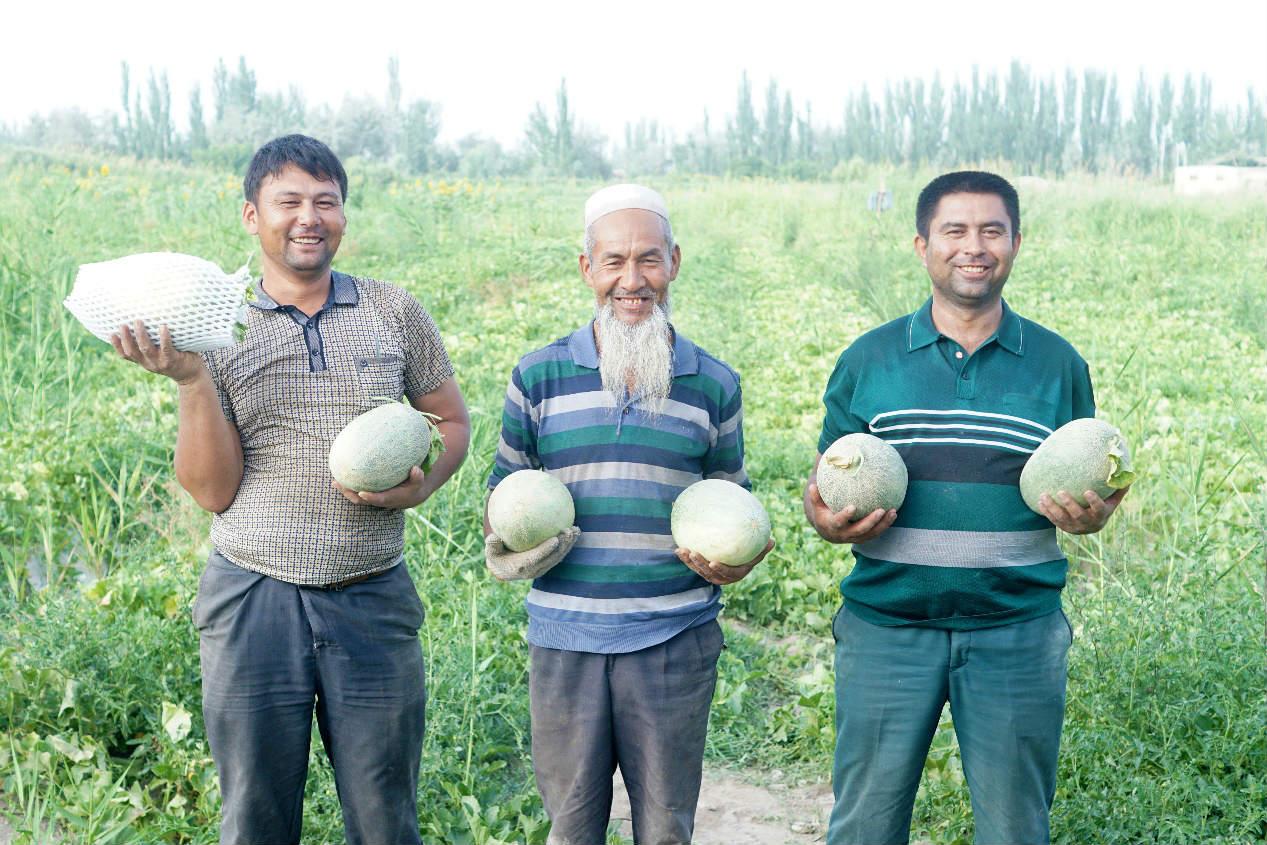 """新疆阿楚留香瓜通过农村淘宝直供直销新链路,成为农产品里的""""网红""""。"""