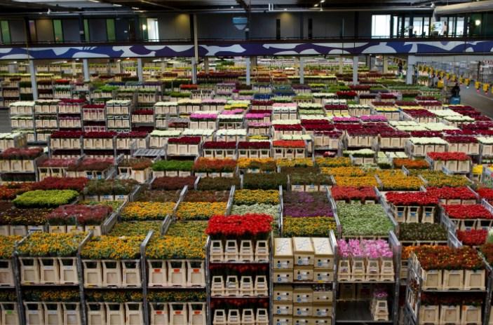 荷兰鲜花出口公司的庞大仓库