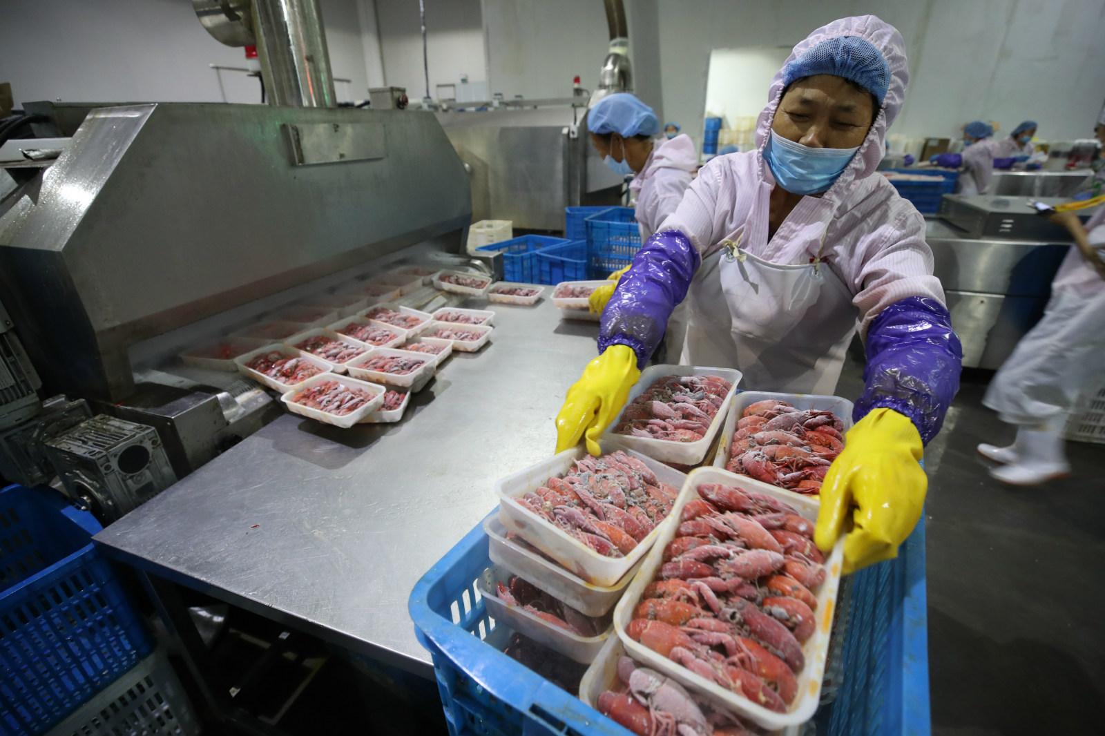 5月30日,湖北省石首市一家小龙虾生产加工园里,经过液氮冷冻的下龙虾被运出生产线。 (2)_meitu_7