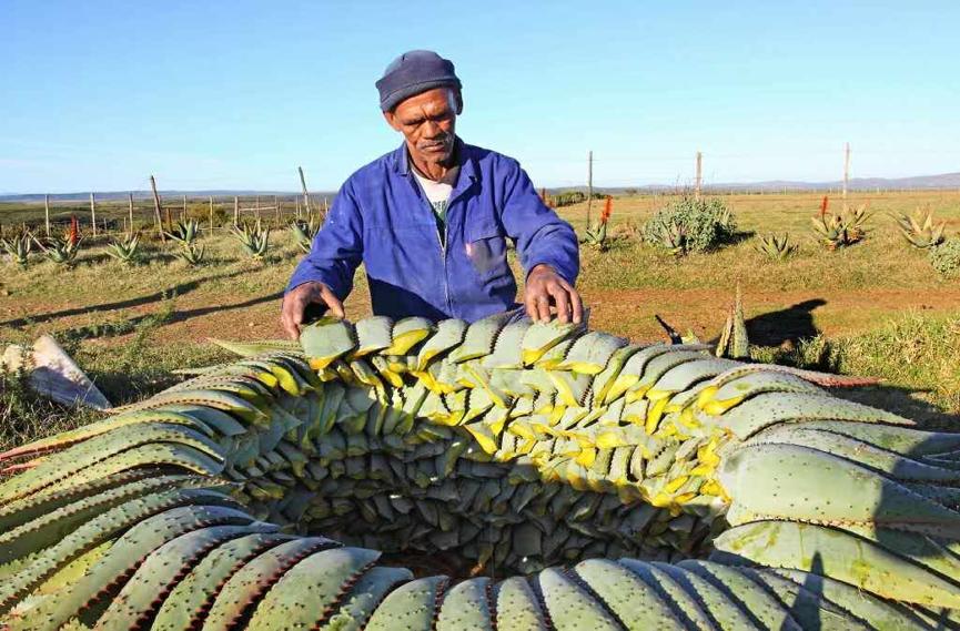 非洲出现新蓝海这些中国商人已抢滩成功