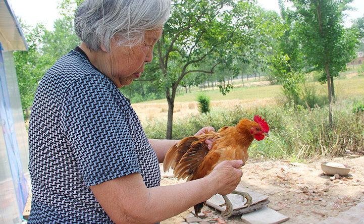 2,85岁的奶奶在验鸡_meitu_6