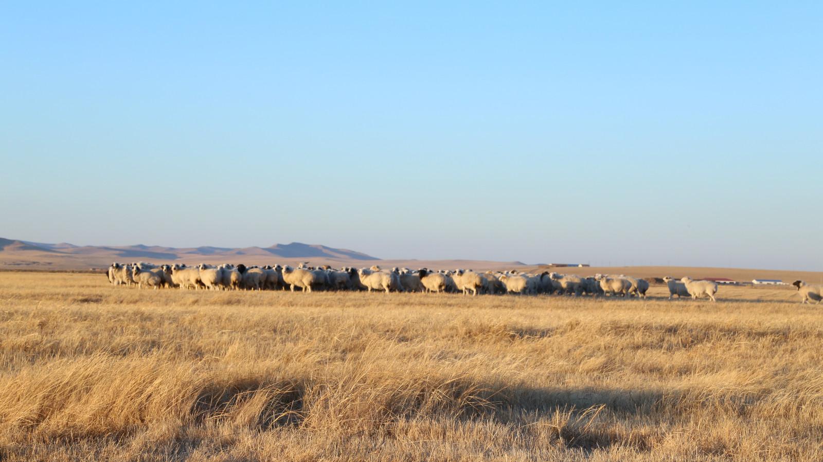 风吹草低见牛羊,毕云生庄园梦实现。_meitu_3
