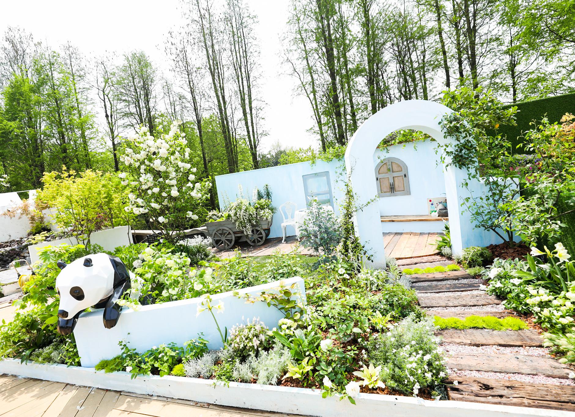 海蒂的花园里的白色木绣球