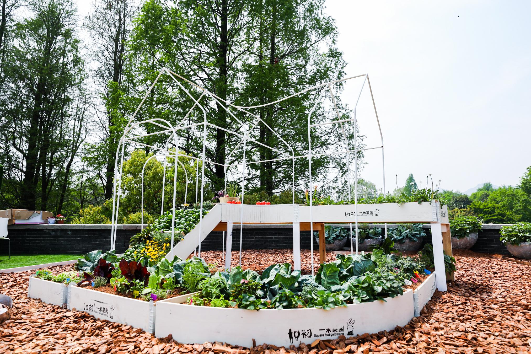 费建成的一米花园